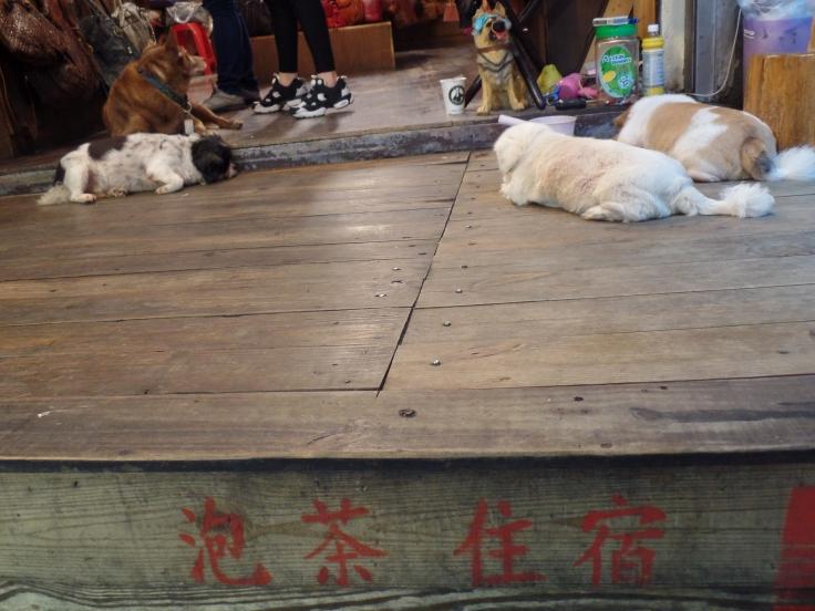 Psy w Jiufenie