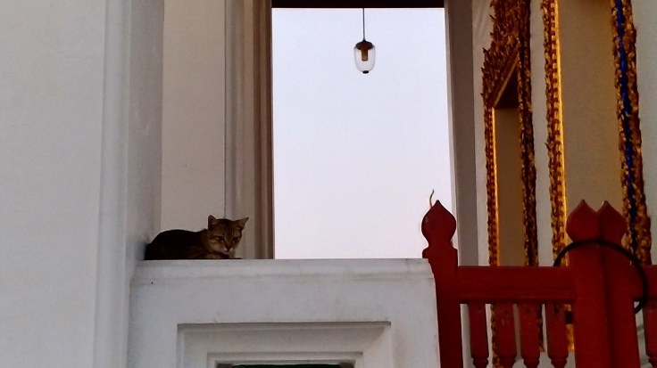 Świątynny kot